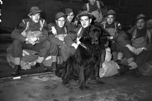 Canadian WW2 Troops with Dog